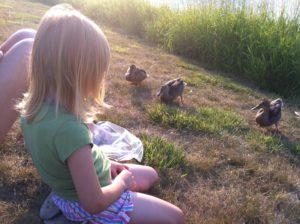 Wild ducks like treats, too