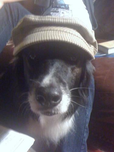 A sharp dressed dog