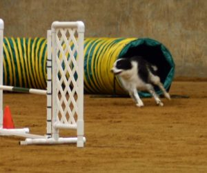 Border Collie Tube