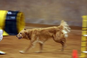 Running Golden