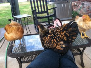 On the back porch with the chickens