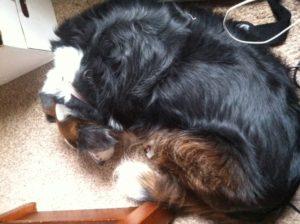 Snuggly Dog