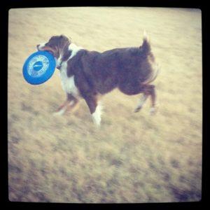 Frisbee Aussie