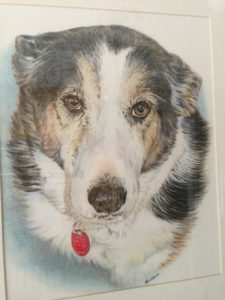 Colored Pencil Australian Shepherd