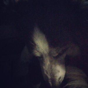 Sleepy Aussie