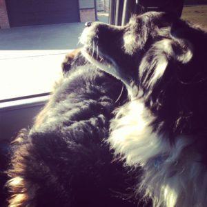 Soaking up the sunlight