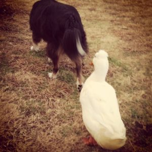 A dog and his duck