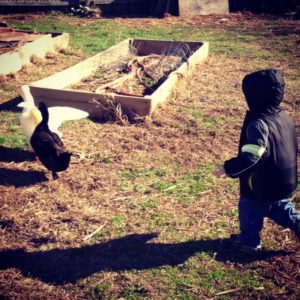Run, ducks!
