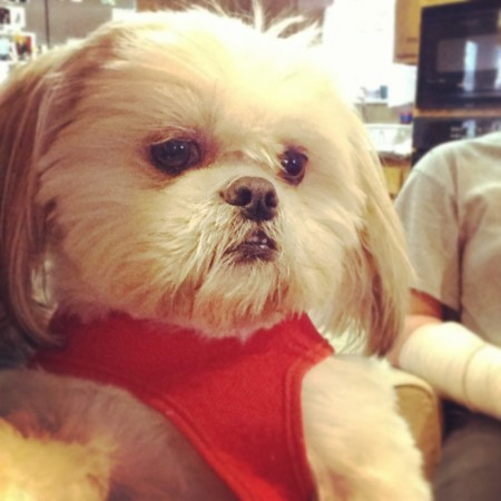 Shih Tzu good for depression?