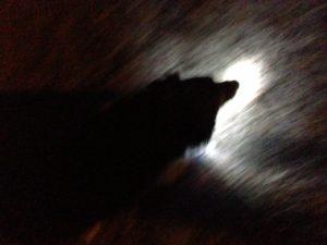 Pup Light