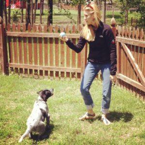 Blue Heeler training