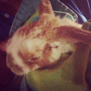 Stinky bunny