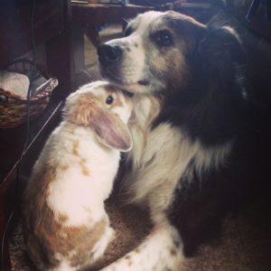Rabbit and Aussie