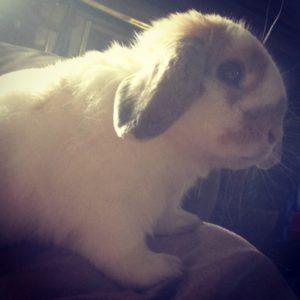 Mischievous little bunny can't help being cute