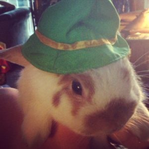 Rabbit in a cute hat