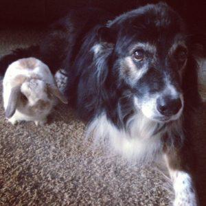 Sad dog hates the bunny