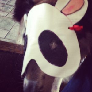 Dog in a panda mask