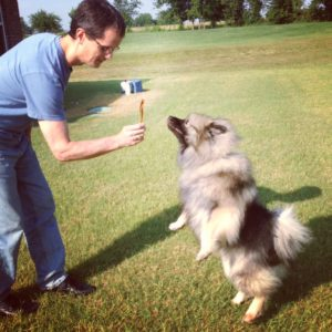 Keeshond begs for a Steer Stick from Jones.