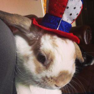 Independent rabbit