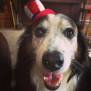 Independence Day dog