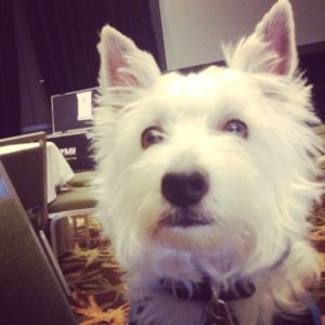 Preston Speaks, an adorable white West Highland White Terrier www.DogTreatWeb.com