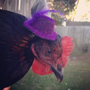A hen in a hat