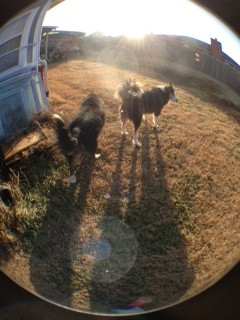 Fish eye lens for the iPhone 5