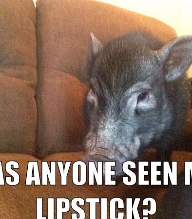 Jones Pig