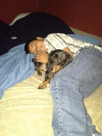 A Dachshund and his boy