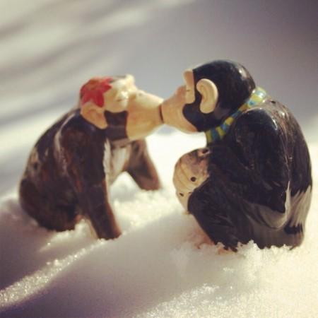 Kissing chimps