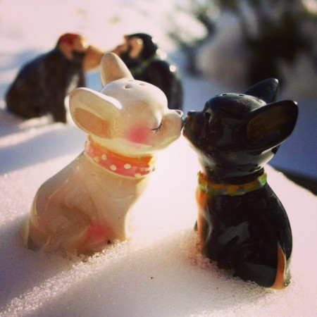Chihuahuas kissing in the snow