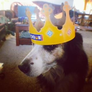 Dog in a BK crown