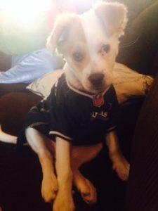 Dallas Cowboys puppy