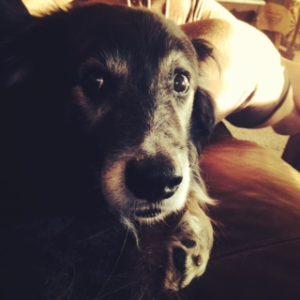 A jealous dog