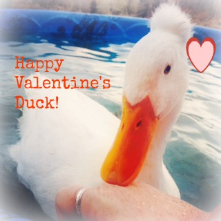 Happy Valentine's Duck!
