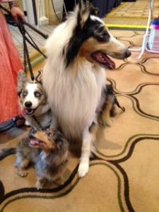 Amazing dog trio at Blog Paws