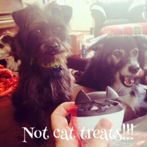 No cat treats for dogs!