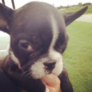 Cute puppy stare
