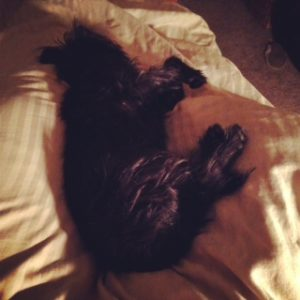 Sleeping Affen