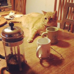Coffee for cats