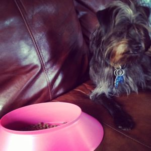 Affen and his Poochie Bowl