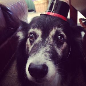 Senior Aussie in a hat