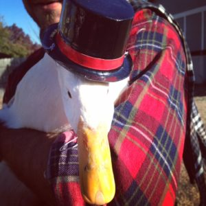 Jimmy the Thanksgiving duck