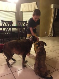 Bonding and begging with Jones Natural Chews
