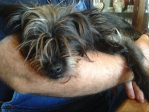 Sad little Affenpinscher