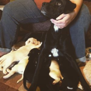 Miracle and her puppies