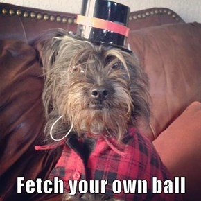 Fetch your own ball