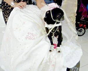 Blushing Pug bride