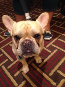 Louie the French Dog at BlogPaws