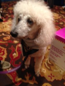 Carma Poodale at BlogPaws 2015